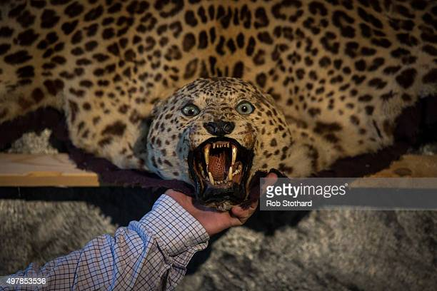 The Head Of A Leopard Skin Rug Estimated To For 10001500 Gbp Is Displayed At