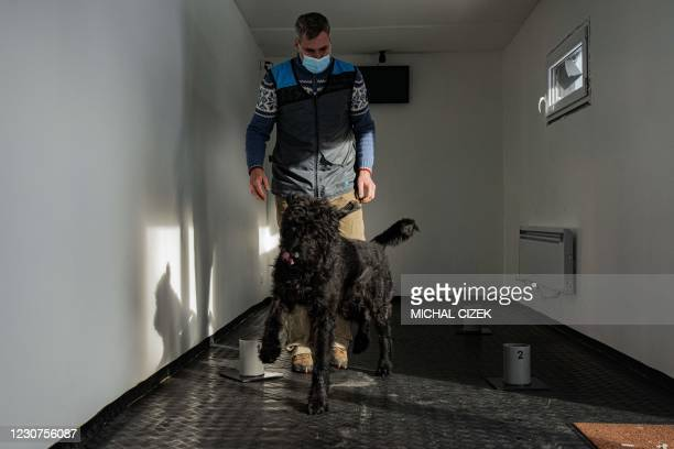 The head of the project Gustav Hotovy stands behind his big Schnauzer dog inside the training centre for Covid-19 sniffing dogs, located inside a...