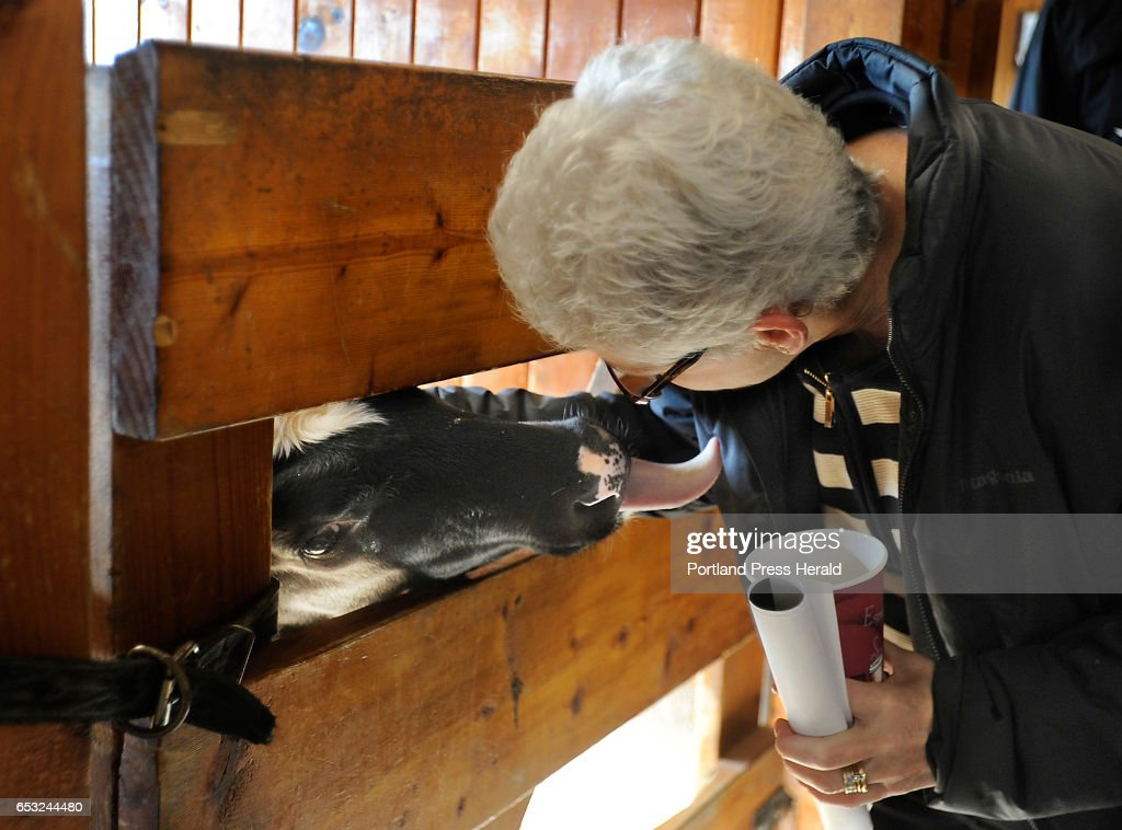 The head of the U.S. Environmental Protection Agency, Gina McCarthy, left, visits Smiling Hill Farm to talk with farmers and U.S. Sen. Angus King about new water quality rules. Here, she gets attention from one of several calves who eyes her coffee as she tours the facility.