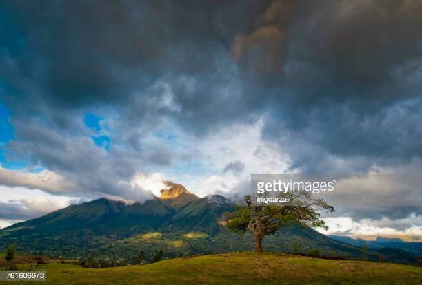 the healing tree (el lechero) by imbabura volcano, otavalo, ecuador - ecuador fotografías e imágenes de stock