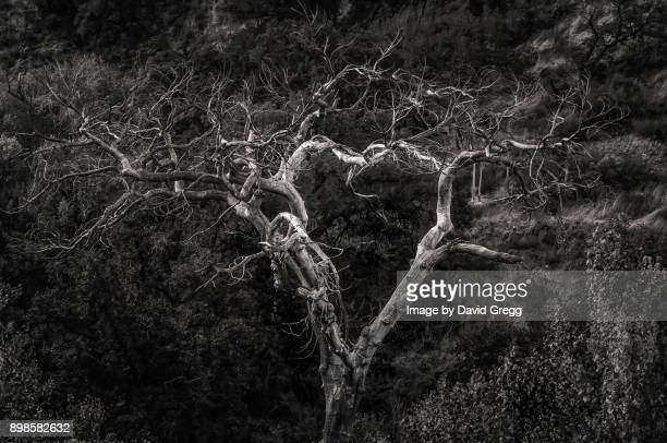 the heart of the forest - tree hugging stock pictures, royalty-free photos & images