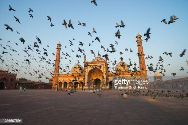 the heaven of the city - new delhi stock pictures, royalty-free photos & images
