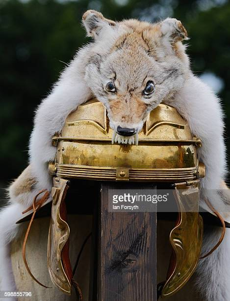 The helmet of a soldier is adourned with a fox as the lives of Roman Legionnaires are reenacted during the Hadrian's Wall Live event at Birdoswald...