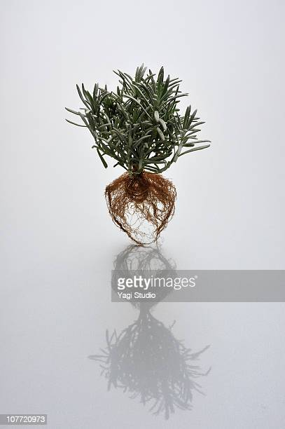 The herb which floats