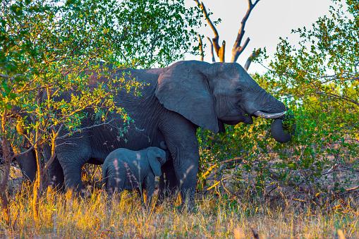 The herd of African savannah elephants 1225589420
