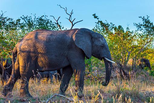 The herd of elephants 1221243573