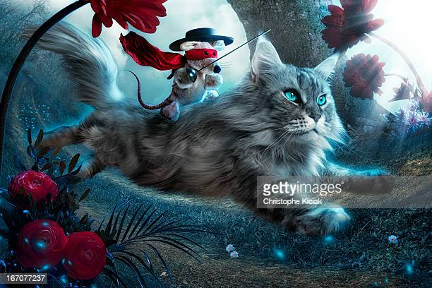 the hero - cat with red hat stock pictures, royalty-free photos & images