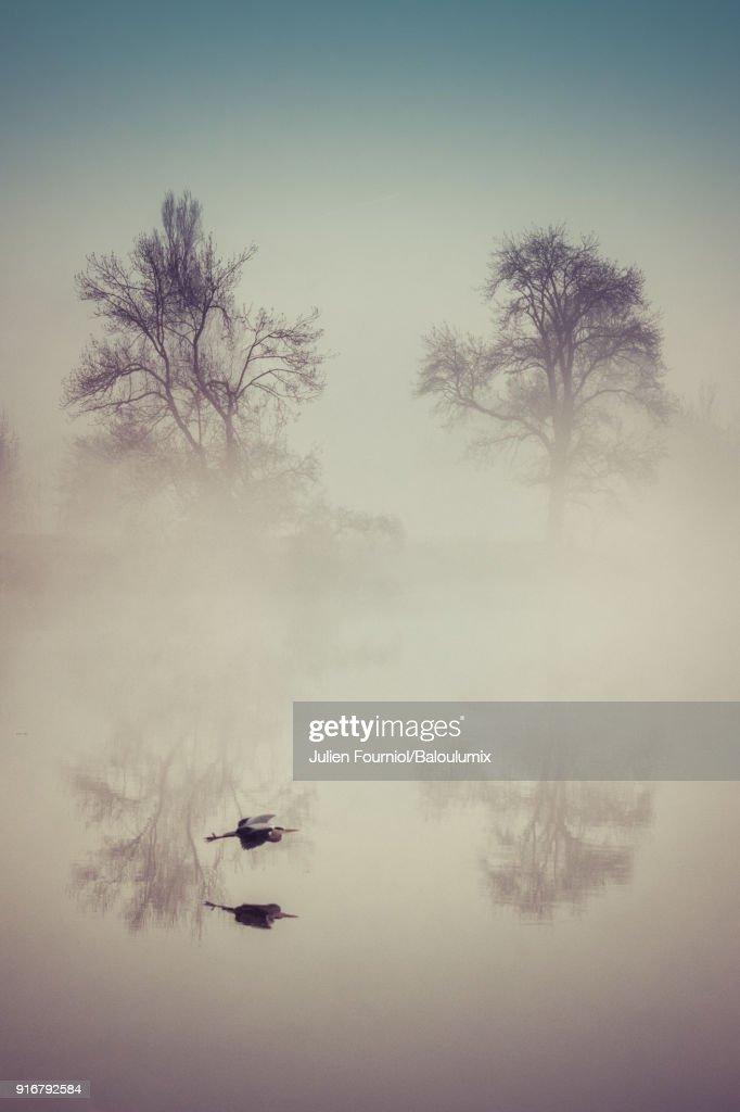 The heron in the mist : Foto de stock