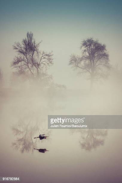 the heron in the mist - westeuropa stock-fotos und bilder