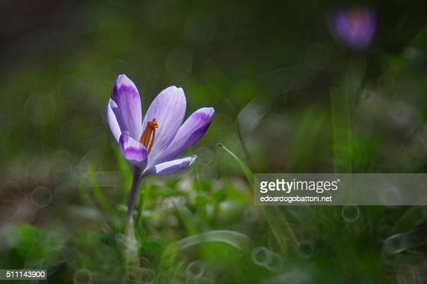 the hidden flower - edoardogobattoni - fotografias e filmes do acervo