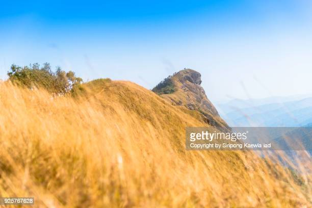 the highest peak of doi mon jong, om koi, chaing mai. - copyright by siripong kaewla iad stock photos and pictures