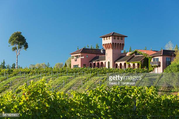 the highfield winery and vineyard, blenheim - marlborough new zealand stock pictures, royalty-free photos & images