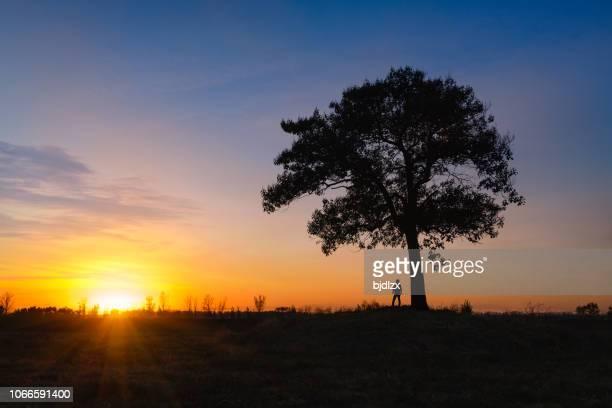 de trekkers en een enkele grote boom zijn in de ondergaande zon. - eén boom stockfoto's en -beelden