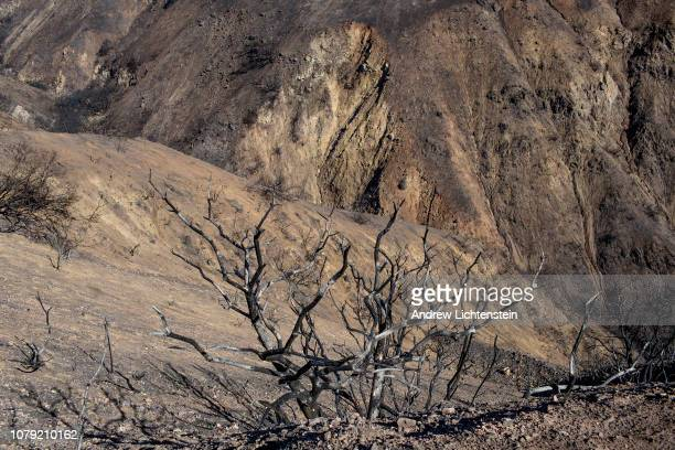 The hills of Malibu are blackened and scorched by the recent Woolsey fire that swept through the area December 7 in Malibu California
