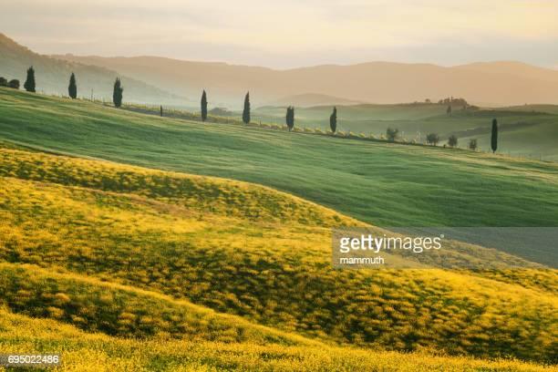 the hills of tuscany in the spring - paesaggio collinare foto e immagini stock