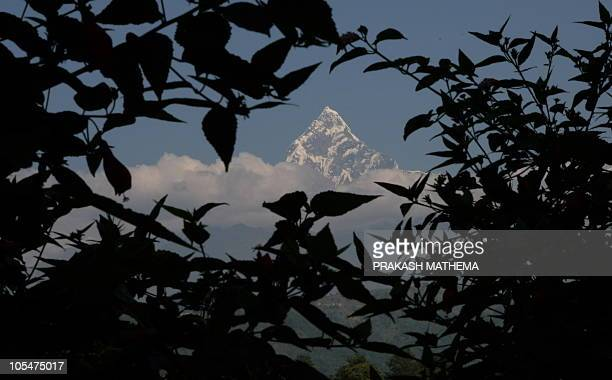 The Himalayan mountain range of Annapurna and the 6993metre Mount Machhapuchre are shown between trees in the popular tourist destination of Pokhara...