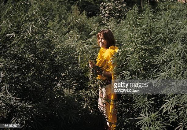On The Road Of India And Afghanistan Inde août 1971 sur la nouvelle route des Indes à Katmandou portrait d'une jeune femme hippie dans la végétation
