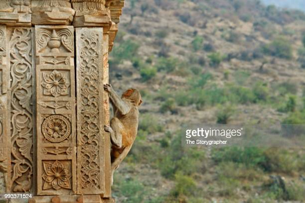 the historic ruins of bhangarh, rajasthan - the storygrapher - fotografias e filmes do acervo