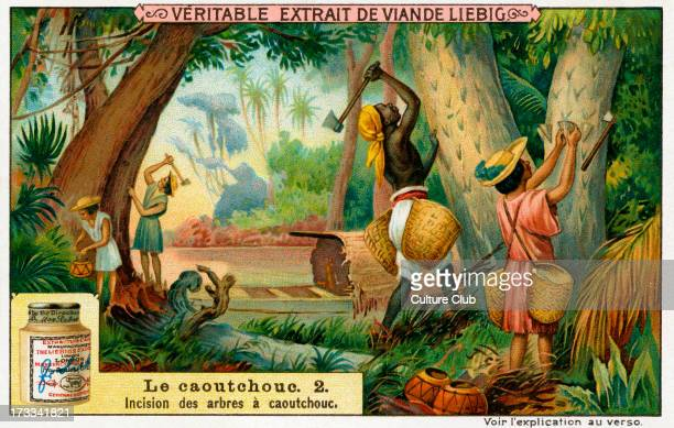 Cutting rubber trees Liebig Collectible Cards Series 'Caoutchouc' No2