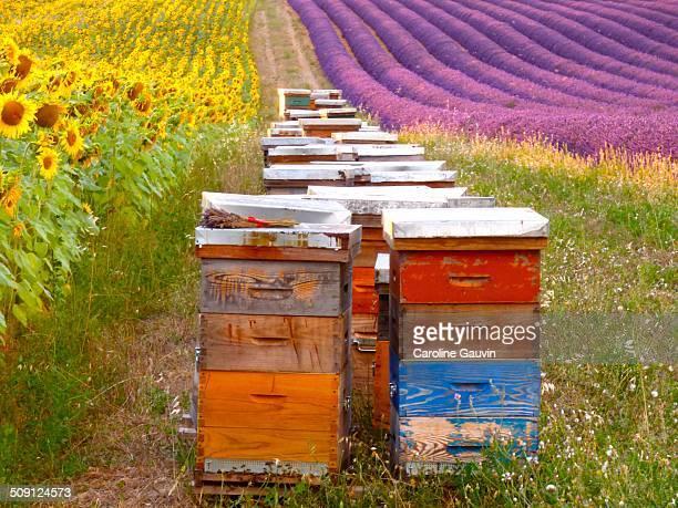the hives - ヴァレンソール高原 ストックフォトと画像