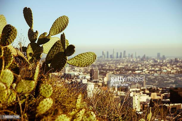 The Hollywood Cactus