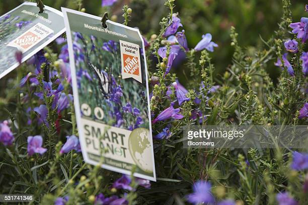 The Home Depot Inc logo is displayed on drought tolerant plants displayed for sale at a Home Depot Inc store in Torrance California US on Friday May...