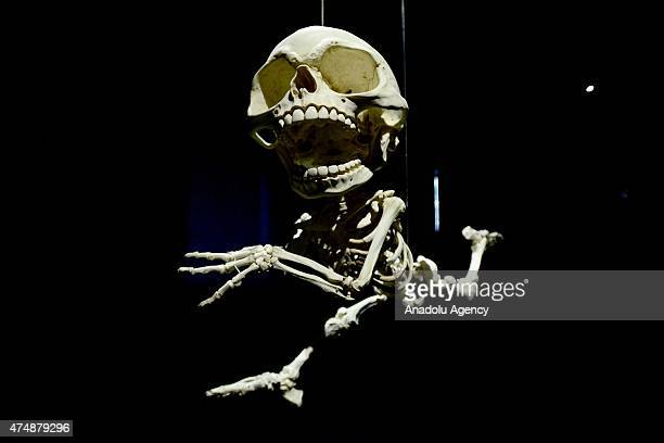 The 'Homo Animatus' a little man with a gigantic skull that resembles a comicstrip Elmer Fudd character is seen during the 'Animatus' exhibition by...