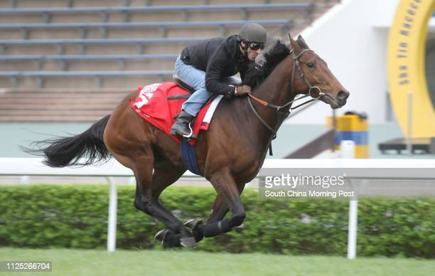 The Hong Kong Cup runner Ransom Note ridden by Michael Hills gallop on the Turf at Sha Tin on 09Dec11