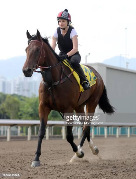 The Hong Kong Sprint runner TAKEDOWN galloping on the turf at Sha Tin. 06DEC16