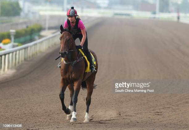 The Hong Kong Sprint runner Takedown troting on the all weather track at Sha Tin. 02DEC16