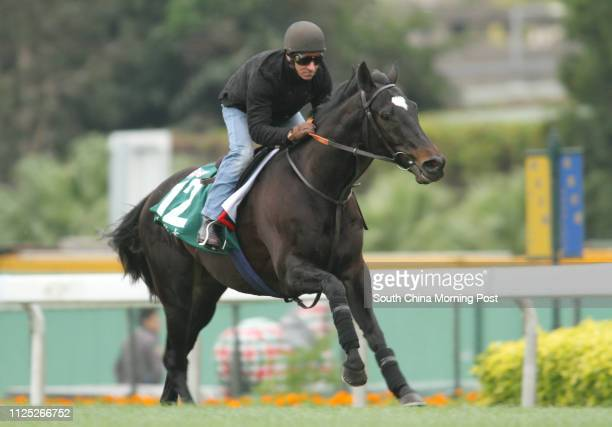 The Hong Kong Vase runner RedWOOD ridden by Michael Hills gallop on the Turf at Sha Tin on 09Dec11