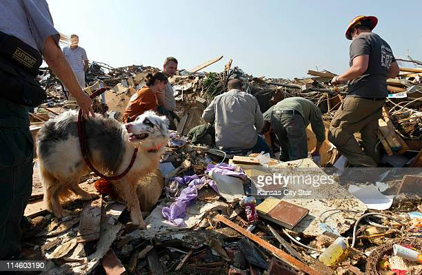 """The hopes of a search and rescue team were raised when """"Fire,"""" a search and rescue dog, signals a human scent by lying down in a pile of rubble on..."""