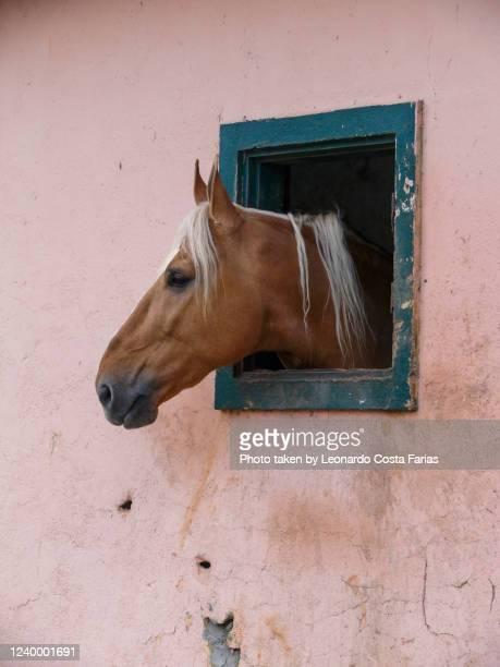 the horse in the pink stable - leonardo costa farias - fotografias e filmes do acervo