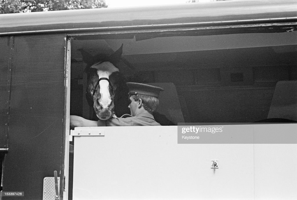 The horse, Sefton, of the Blues and Royals cavalry regiment, leaving Hyde Park Barracks in a horse box on his way to retirement after seventeen years service with the British Army, London 29th August 1984. Sefton was taking part in a military parade in Hyde Park on 20th July 1982, when a Provisional IRA car bomb killed five soldiers and seven horses. Sefton survived despite a severed jugular vein, an eye injury and 34 other wounds. (Photo by Keystone/Hulton Archive/Getty Images