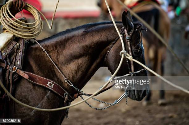The horse stay calm while the charro twirls the rope in fancy patterns around him