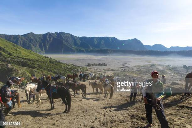 the horsemen service at the foothill of mount bromo, bromo tengger semeru national park, east java of indonesia. - shaifulzamri foto e immagini stock