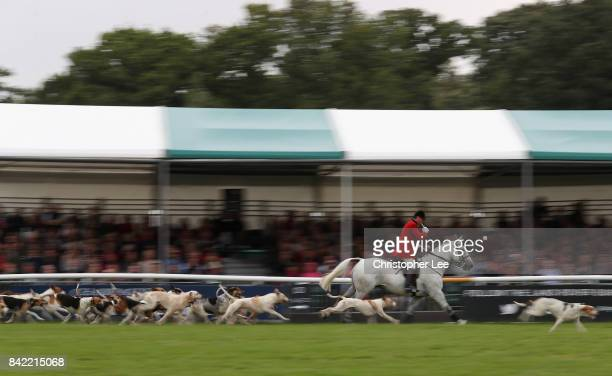 The Hounds during their lap of honour during Day Four of The Land Rover Burghley Horse Trials 2017 on September 2 2017 in Stamford England