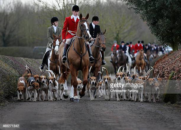 The hounds of the Atherstone Hunt are led by Hunstman Stuart Barton on March 5 2015 in Bosworth England The hunt is celebrating its bicentenary this...