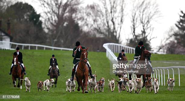 The Hounds of The Royal Artillery Hunt on show ahead of The Royal Artillery Gold Cup at Sandown Park on February 19 2016 in Esher England