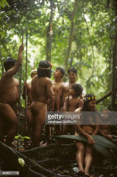 The Huaorani Waorani or Waodani also known as the Waos are native Amerindians from the Amazonian Region of Ecuador who have marked differences from...