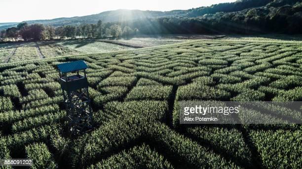 The huge Halloween's Corn Maze in Pennsylvania, Poconos Region