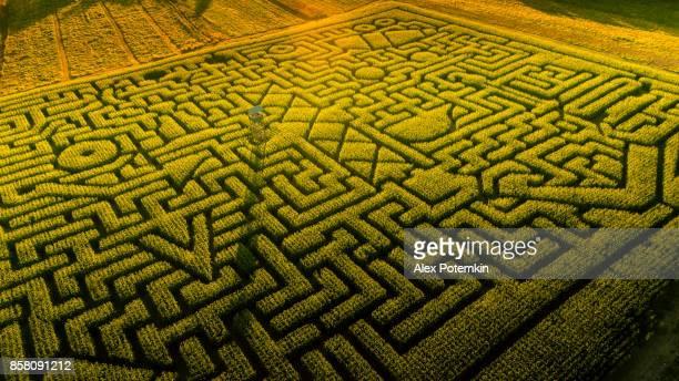 ペンシルベニア州ポコノス地域に巨大なハロウィーンのトウモロコシ迷路