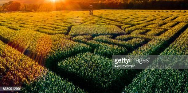 Labyrinthe de maïs de l'Halloween énorme en Pennsylvanie, région des Poconos