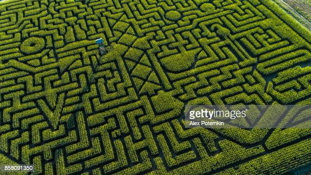 the huge halloween's corn maze in pennsylvania, poconos region - maze stock photos and pictures