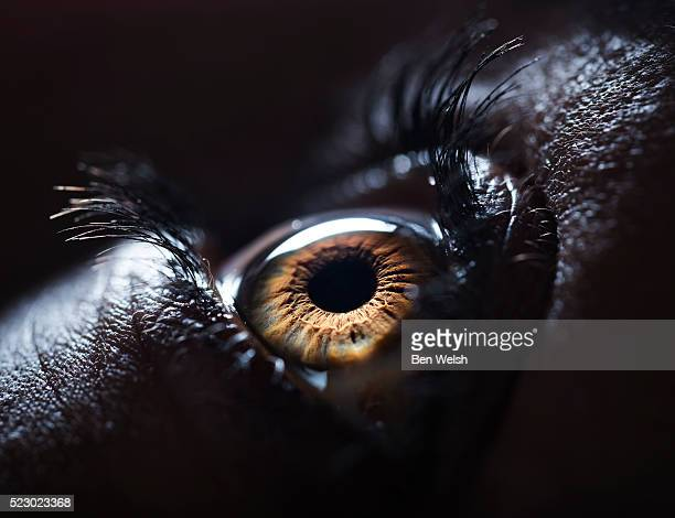 the human eye. - image stock pictures, royalty-free photos & images