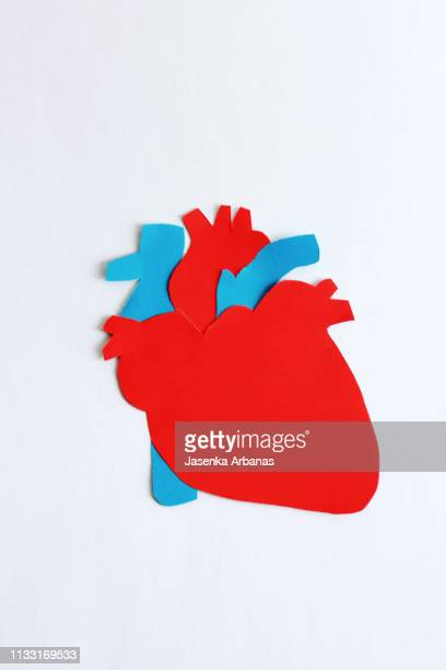 the  human heart - human heart stock pictures, royalty-free photos & images