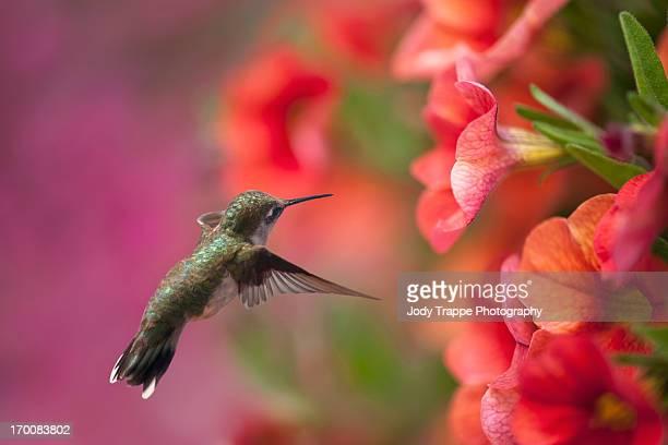 The hummingbirds  baaaaack!