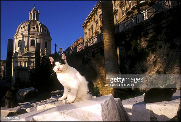 The hundreds of cats who have made their home in the nooks and crannies of the ancient city of Rome are now as protected as their surroundings after...