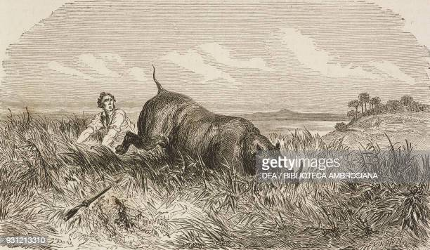 The hunter being hunted in turn by a rhinoceros drawing by Gustave Dore from a sketch by Andersson from Adventures and hunting of the traveller Carl...