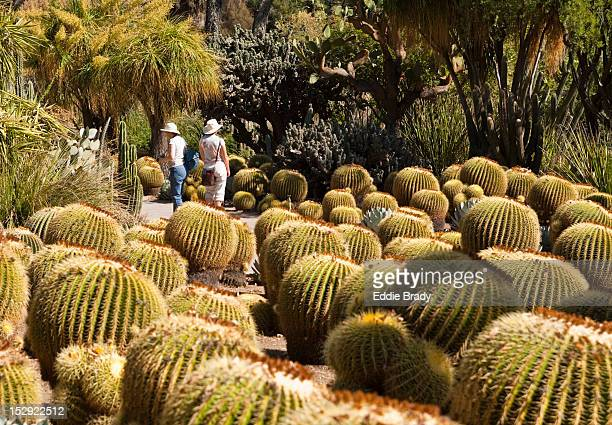 the huntington botanical gardens and visitors. - san marino california stock pictures, royalty-free photos & images